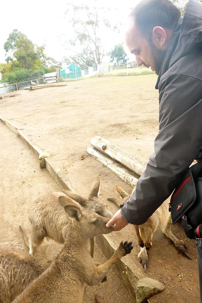 13_Me_Feeding_Kangaroos_In_Bonorong_Tasmania