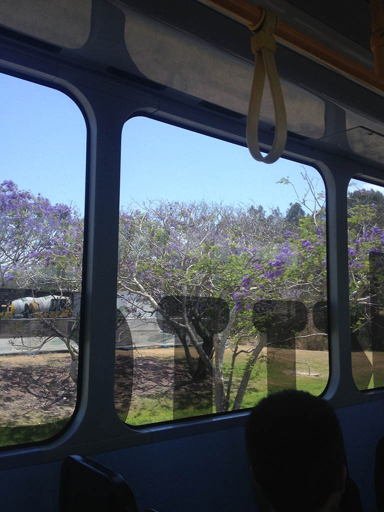 10_Brisbane_Purple_Trees