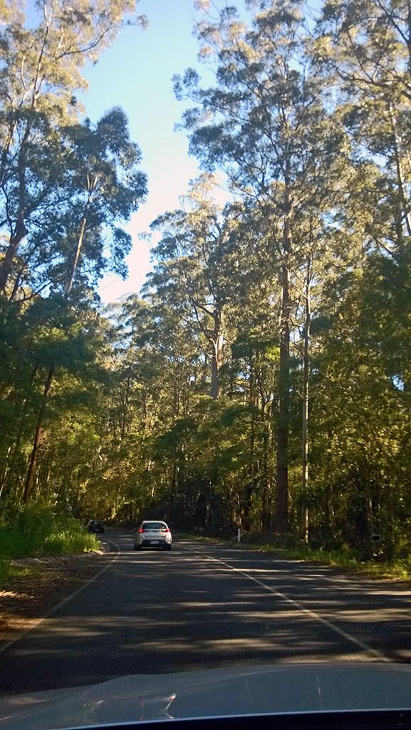 07_Rain_Forest_Australia