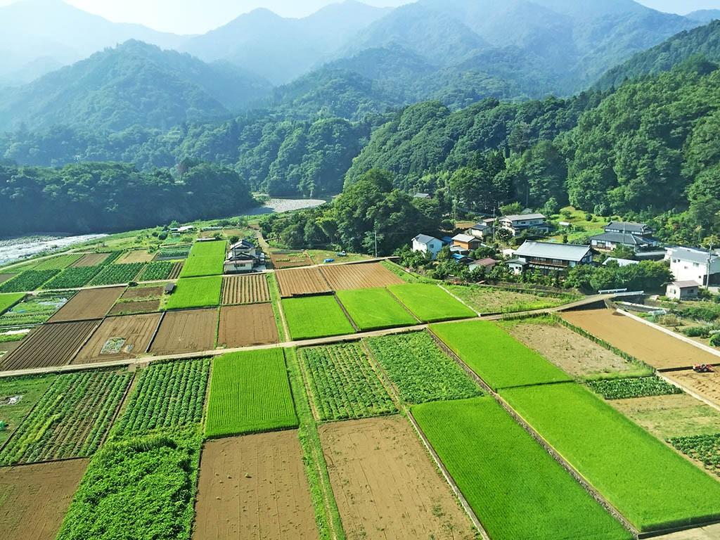 01_Rice_Fields_Near_Kawaguchiko