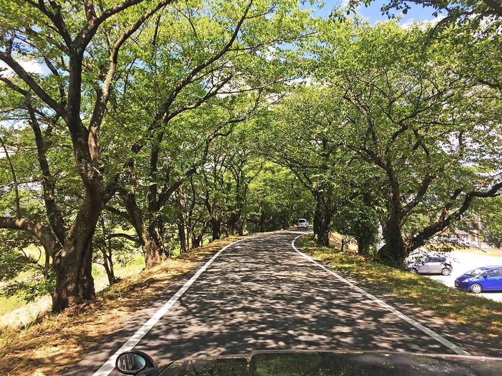 01-Fujieda-Ride-Towards-Tea-Fields