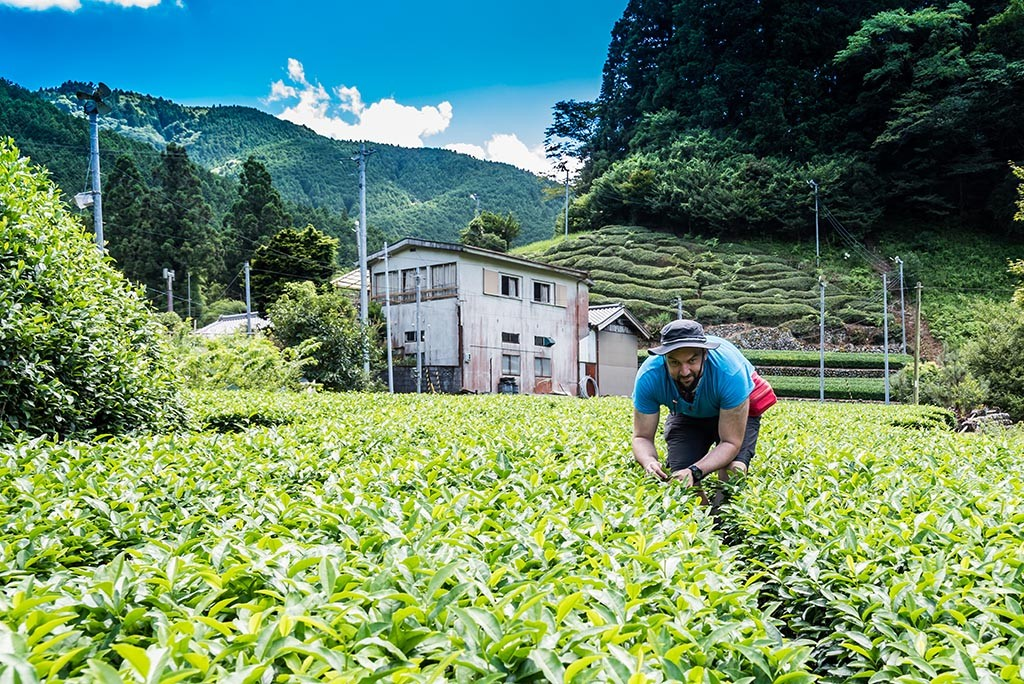 10-Me-In-The-Tea-Field