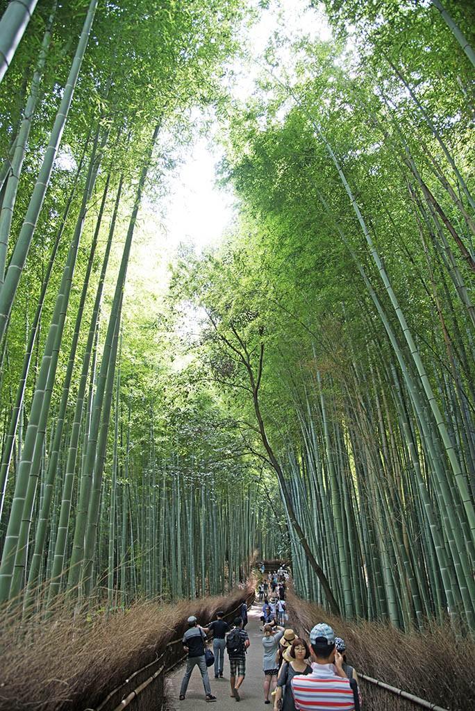 12-Arashiyama-Bamboo-Forest