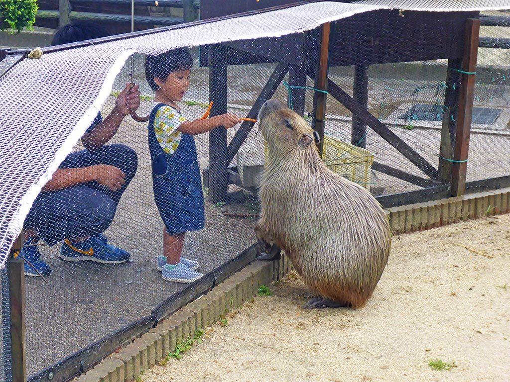 13-capybara-in-Beppu