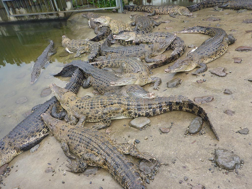 14-Crocodiles-In-Beppu