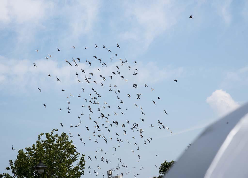 04-peace-birds-in-a-peace-park-nagasaki-japan